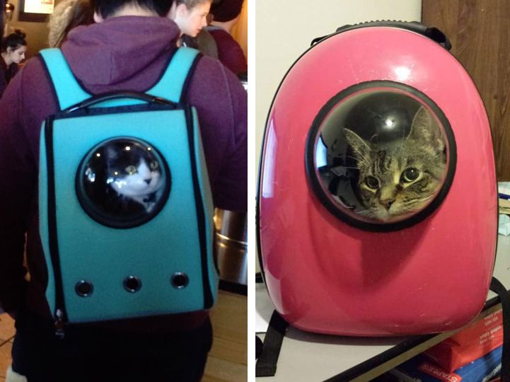 Colorful Cat Backpacks Feature Bubble Window for Traveling like an Astronaut - My Modern Met