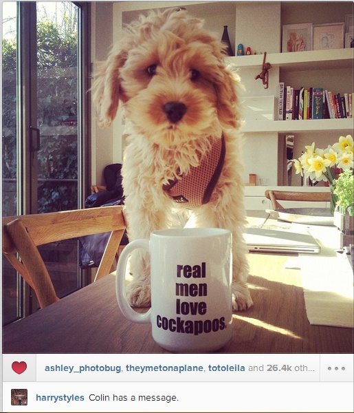 Harry just posted this!!!