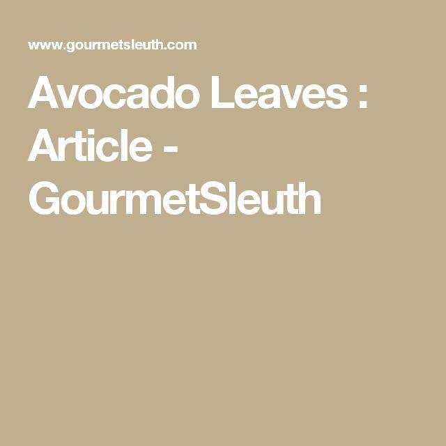 Avocado Leaves : Article - GourmetSleuth