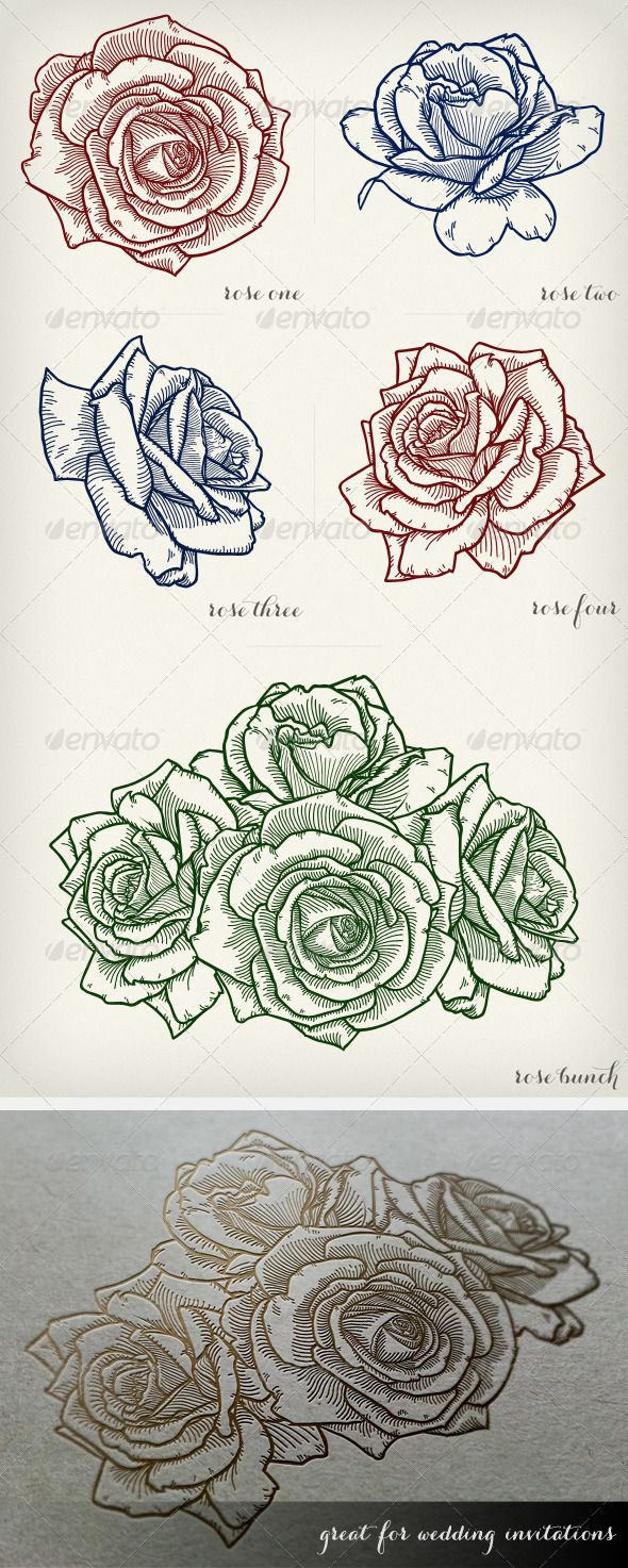 Detailed Vector Roses 8 best Templates images