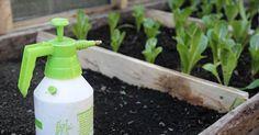 Descubre la selección de fertilizantes que realizan desde LA HUERTA DE IVAN para conseguir un huerto y unas plantas de 10
