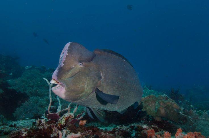 underwater phot...