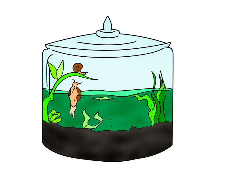Build a self sustaining ecosystem terraria plants and for Self sustaining fish tank