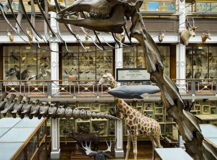 Dublin Natural History Museum