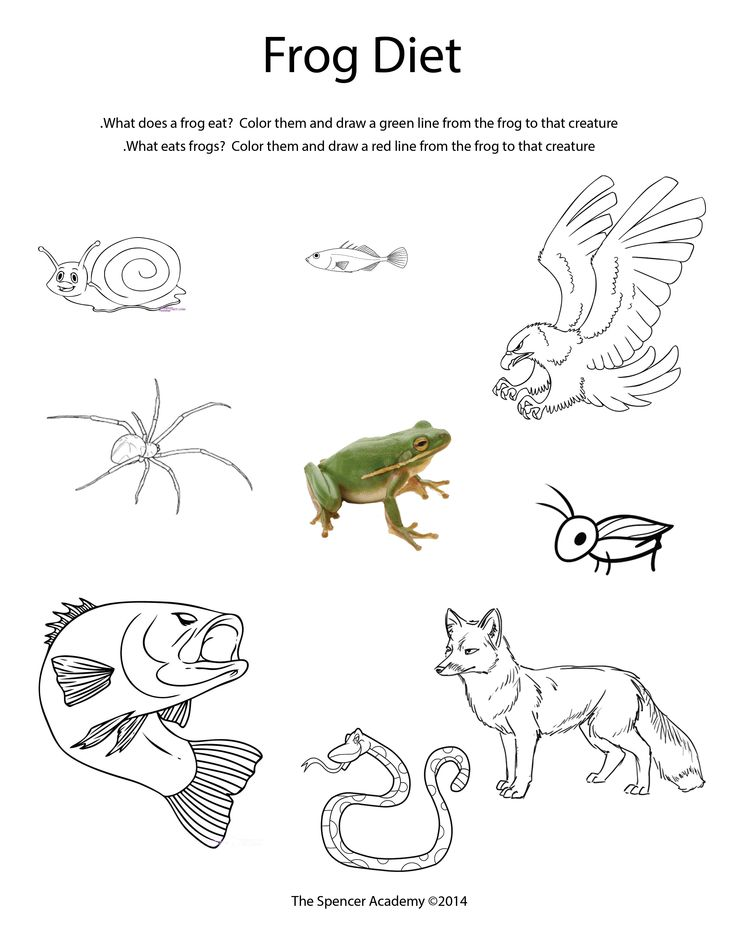 Printables Predator Prey Worksheet predator and prey worksheet davezan collection of bloggakuten