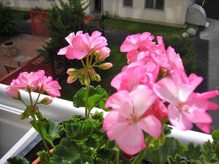 Imagenes De Plantas Con Flores - Wallpaper Hd 4 En HD Gratis