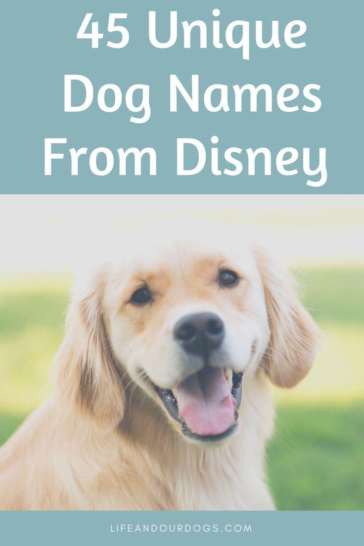 45 Disney Inspired Dog Names Dog Names Golden Retriever Dogs