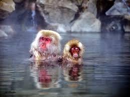 Image result for Jigokudani Monkey Park