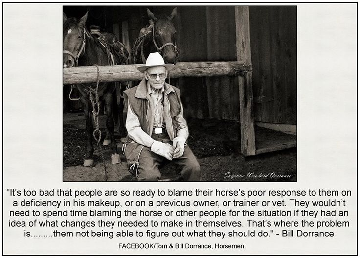 Never just blame the horse