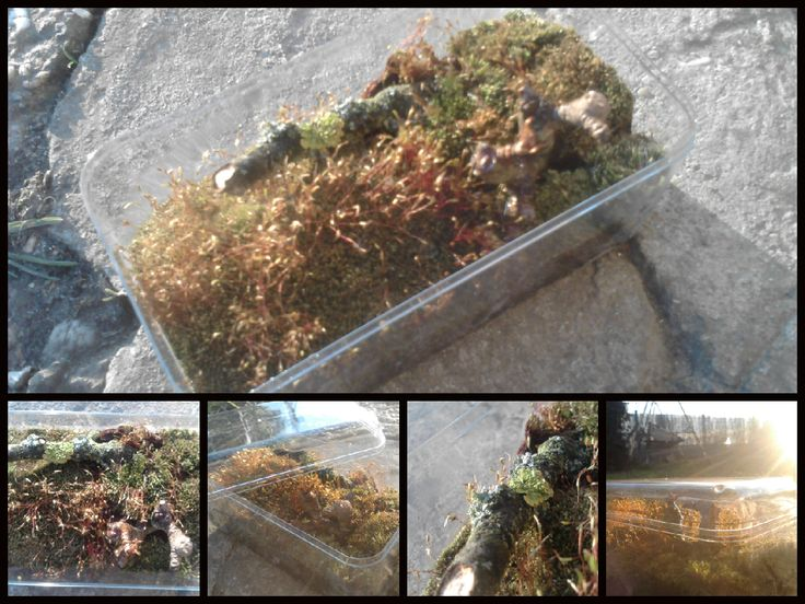 Another herbarium, this time for my beloved. :)  Made out from some moss, tree branch, flower-soil, water, and put into a plastic box. :)