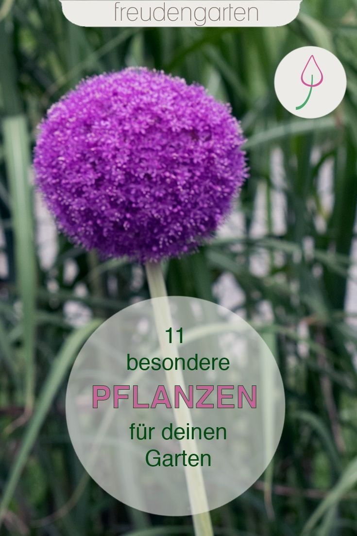 11 Aussergewohnliche Pflanzen Fur Den Garten Winterharte Pflanzen Garten Pflanzen Garten Pflanzen