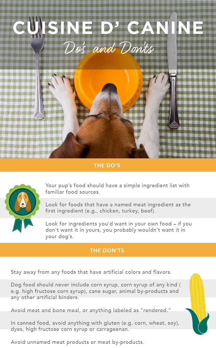 The 24 Best Dog Food Brands and How To Choose A Good Dog Food