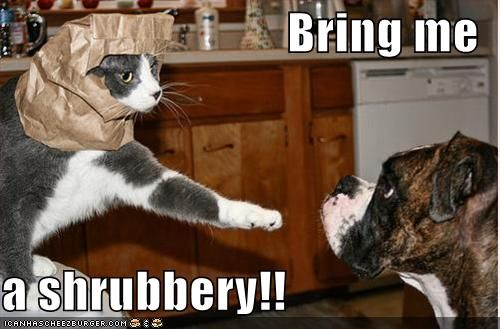 Monty Python!!!!Montypython, Funny Cat Photos, Knights, Funny Pictures, Funnypictures, Holy Grail, Funny Photos, Monty Python, Funny Animal