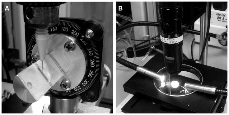 Figure 1 Photographs of blade penetration and observation of wound structure.