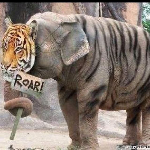 Even the elephants want to be tigers