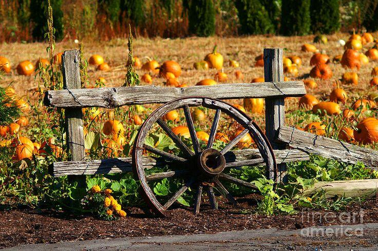 Wagon Wheel In The Pumpkin Patch Photograph  - Wagon Wheel In The Pumpkin Patch Fine Art Print