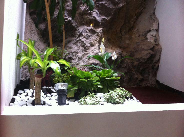 Jardín interior. #Plantas #jardín interior #piedra #tezontle #piedras blancas #pie de elefante