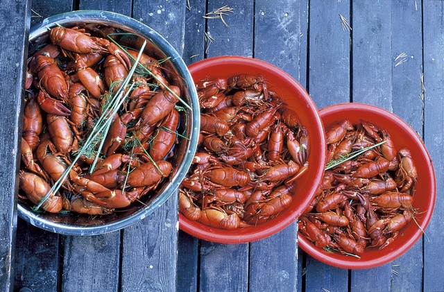 Finnish Crayfish | Photos and Finland