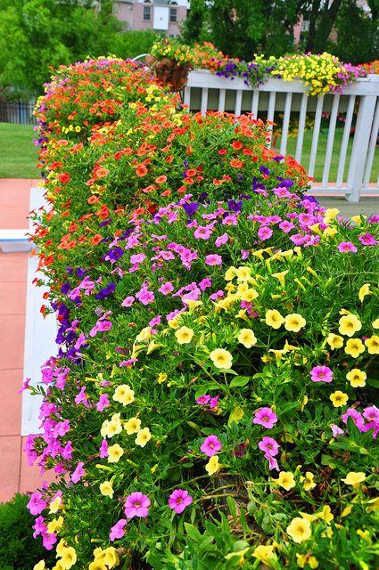 25 b sta id erna om million bells p pinterest petunior och k rl blommor. Black Bedroom Furniture Sets. Home Design Ideas