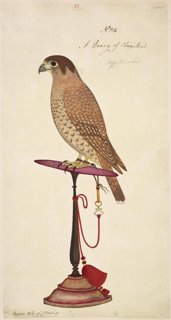 From British Library http://trendland.com/rare-wildlife-illustrations-from-the-british-library/