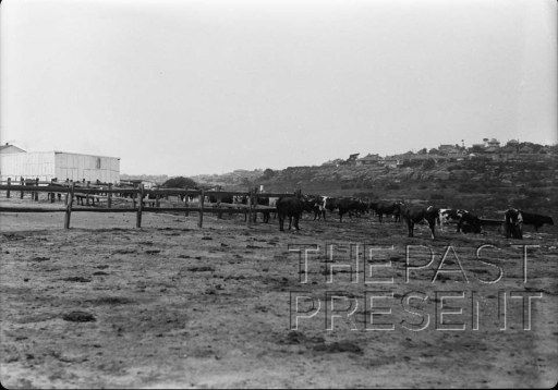 Small dairy near Folly Point on west side of Willoughby Bay in North Sydney showing vacant character and steep slopes leading to bay and hom...