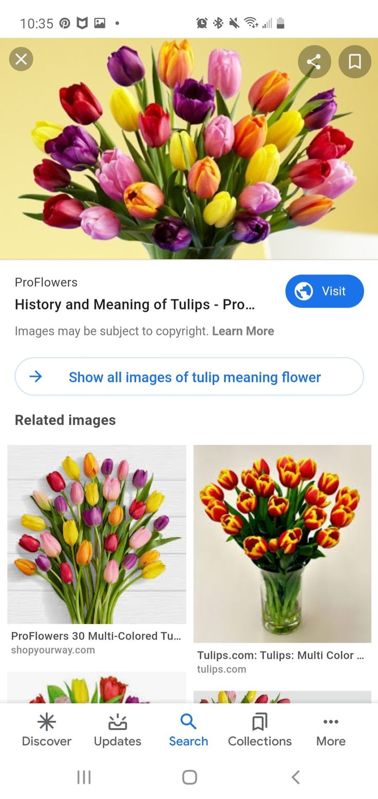 Pin By Babs Blanks On Denver In 2020 Flower Meanings Tulips Meaning Tulips Flowers