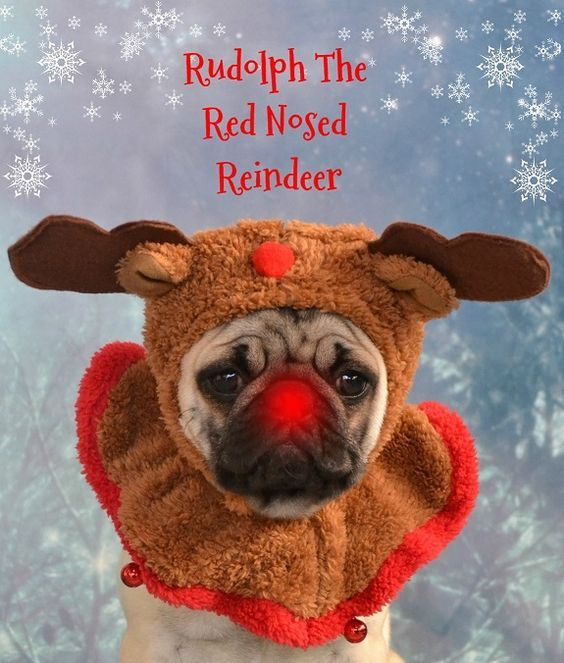 Thank you to @dapuglet for #Pugmas joy! www.jointhepugs.com
