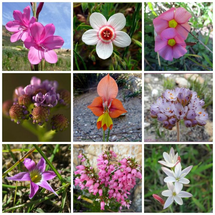 Floral wonders in the Overberg