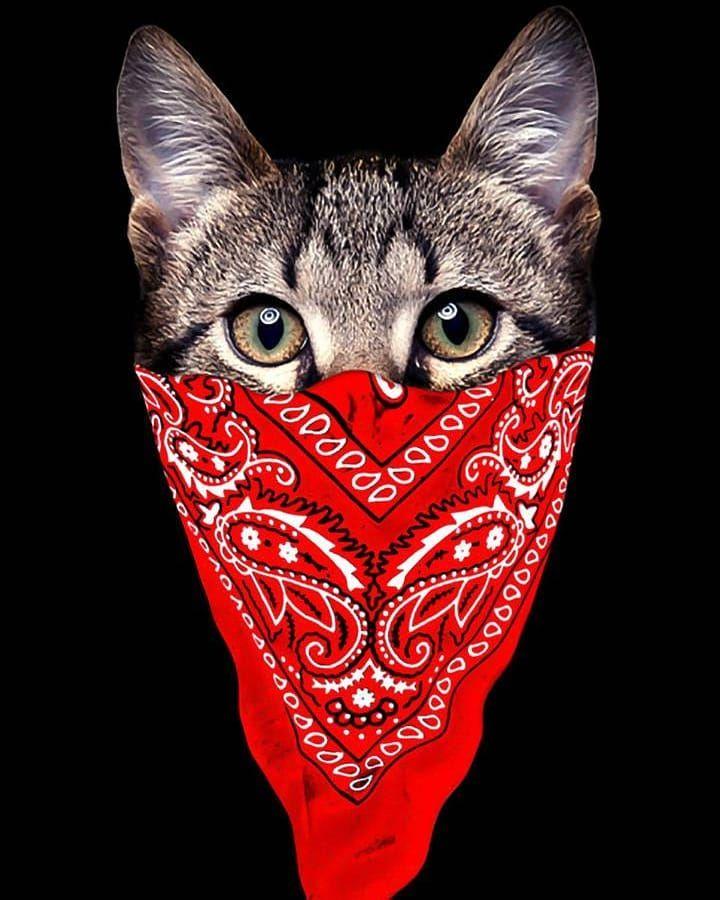 Cat Gangsta Kedi Cat Gangsta Gangster Izmir Istanbul Rap Benfero Anlpiyanc Khontkar Men Short Sleeve Cat Leggings Summer Patterns