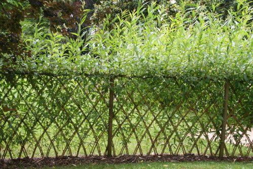 Haie d osier tress en croisillons limeuil en dordogne for Entretien jardin dordogne