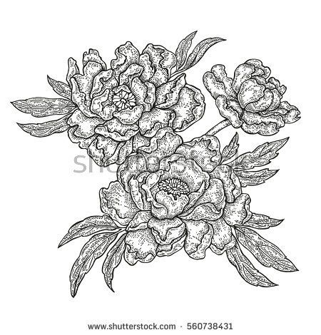 Hand Drawn Spring Peony Flowers And Leaves Isolated On White Background Vector Illustration Engraved