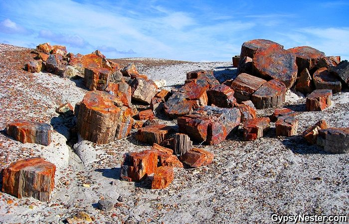 Petrified Forests are not petrifying places. Visit Lesvos to see one.