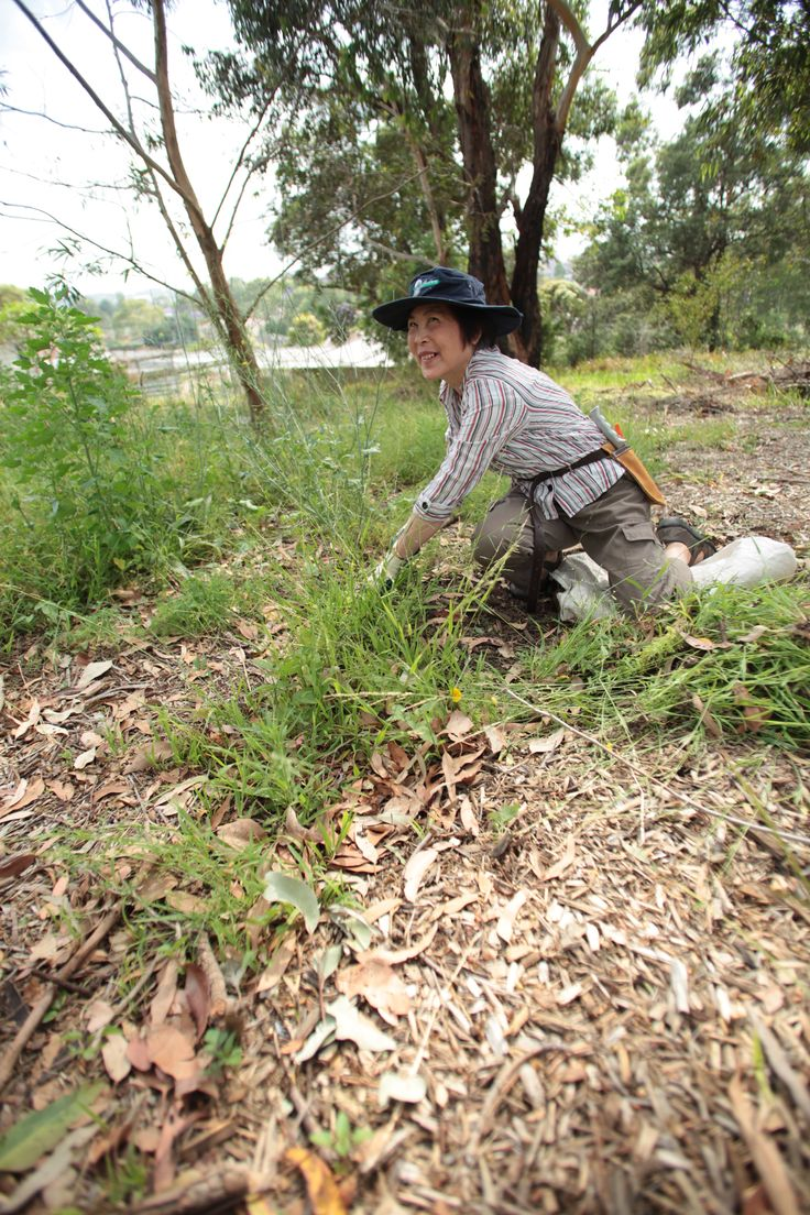 Meadowbank Park - Constitution Road, Meadowbank, NSW. Bushcare volunteers meet the 2nd Sunday of each month from 9.00am - 11.00am. All welcome. #Ryde #Meadowbank #Park #Bushcare #Environment #Sustainability #Conservation #Bush #Flora #Volunteer #CityofRyde #RydeLocal