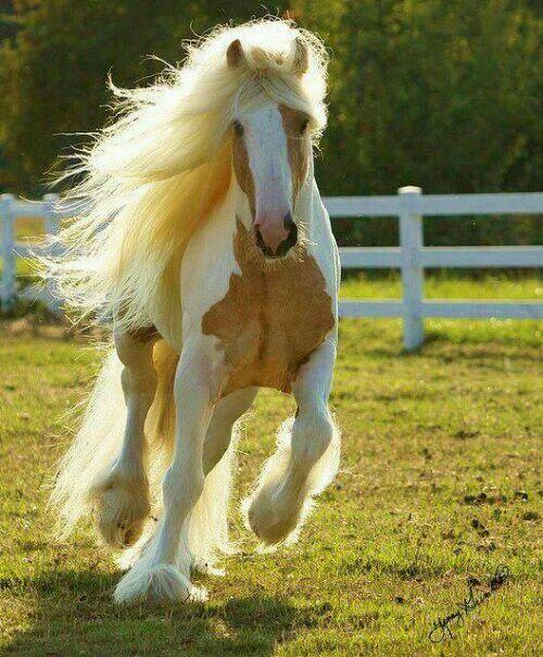 Silver stallion tammy and heidi cam show 2 5