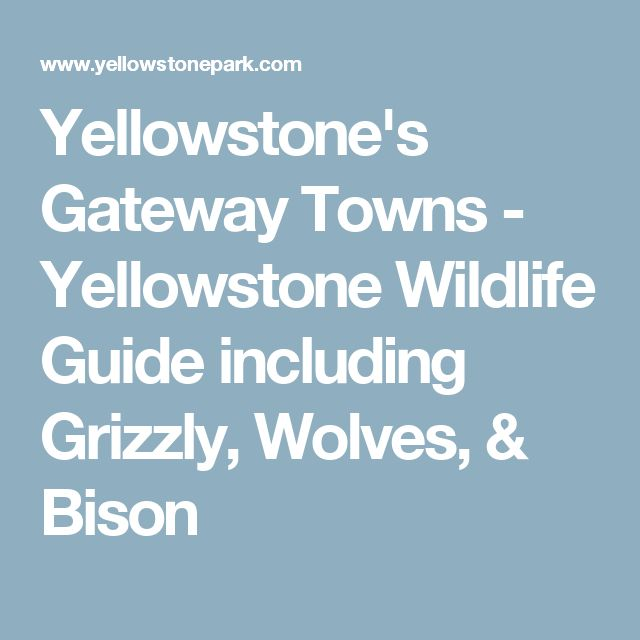 Yellowstone's Gateway Towns - Yellowstone Wildlife Guide including Grizzly, Wolves, & Bison