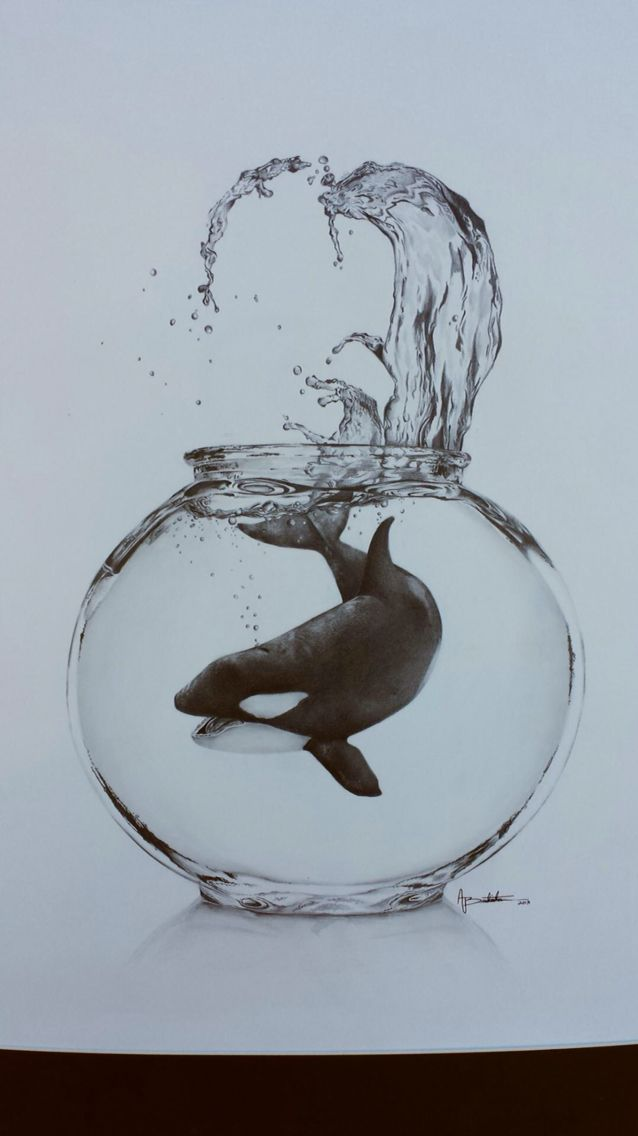 Killer whale in a fish bowl