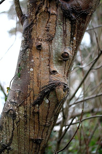 will you hug me? Natural face in a tree