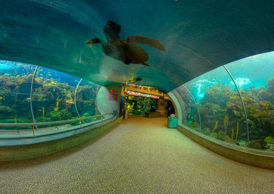 The Florida Aquarium, Tampa, FL. Facebook: Anna Maria Island Beach Life www.annamariaislandhomerental.com Twitter: AMIHomerental