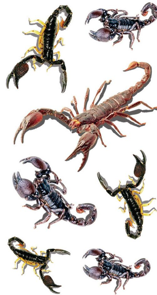 Waterproof Temporary Fake Tattoo Stickers 3D Scorpion Scary Classic Big Design Body Art Make Up Tools #Affiliate