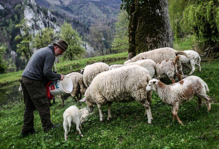 """Der Tiefwurzler - Am Ende einer Sackgasse hoch über Ternberg und tief im Nationalpark Kalkalpen wurde Hermann Jansesberger vor 52 Jahren geboren. Nur hier will er leben. Nur hier will er sterben, weil: """"Des is mei Dahoam."""" Mehr dazu hier: http://www.nachrichten.at/oberoesterreich/hoamatland/Der-Tiefwurzler;art160787,1375055 (Bild: Weihbold)"""