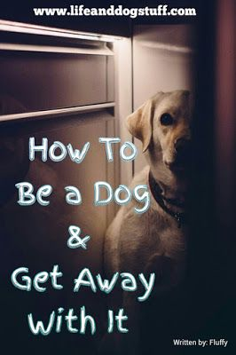 Check out our new blog post! How to Be a Dog and Get Away With It #dogs #humor