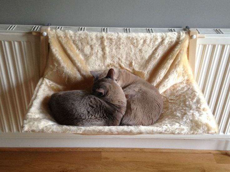 cat radiator hammock 29 best cat hammocks images on pinterest   hammock hammocks and      rh   pinterest co uk