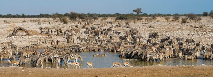 Visit the greatest wildlife sanctuary in Namibia. #EtoshaNationalPark offers a variety of accommodation options and spectacular wildlife viewing.