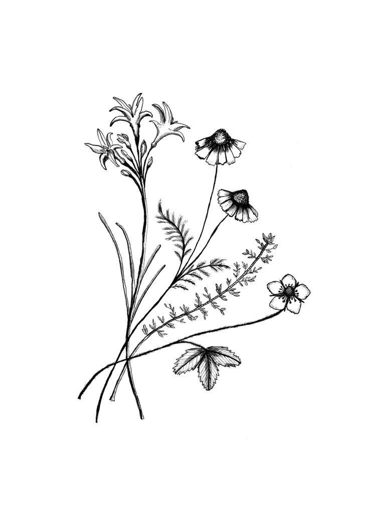 Wildflower Line Drawing : Best images about tattoo on pinterest friend