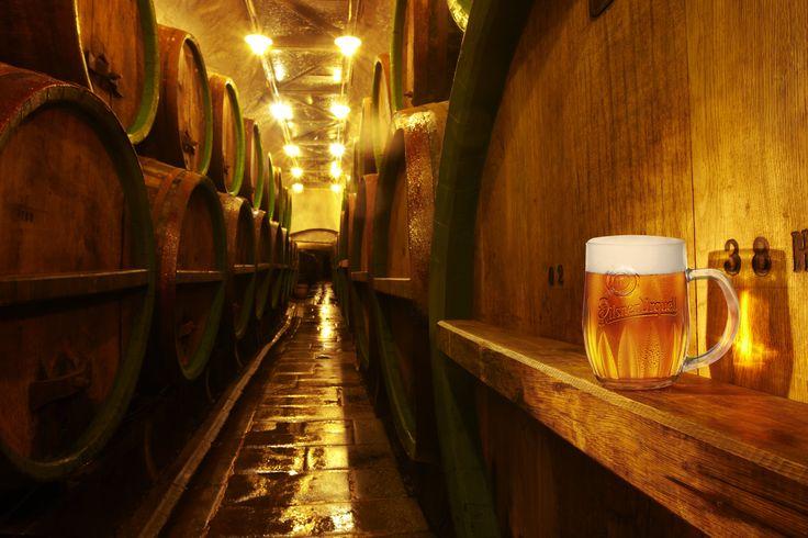 Pilsen Brewery    (http://www.pilsen.eu/tourist/)