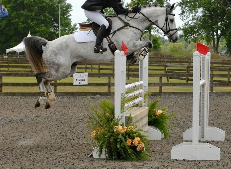 For a serious dose of motivation to perfect your show jumping, just take a look at these picture-perfect duos... #Talent #YouMightBeJealous