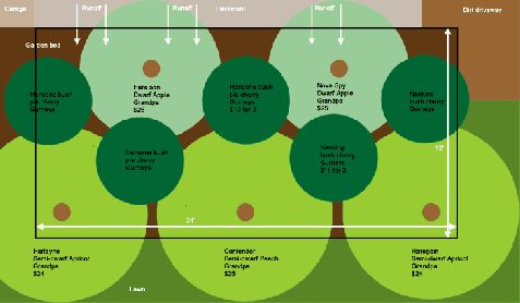 Fruit tree guild (how to plant beneficial plants around fruit trees)