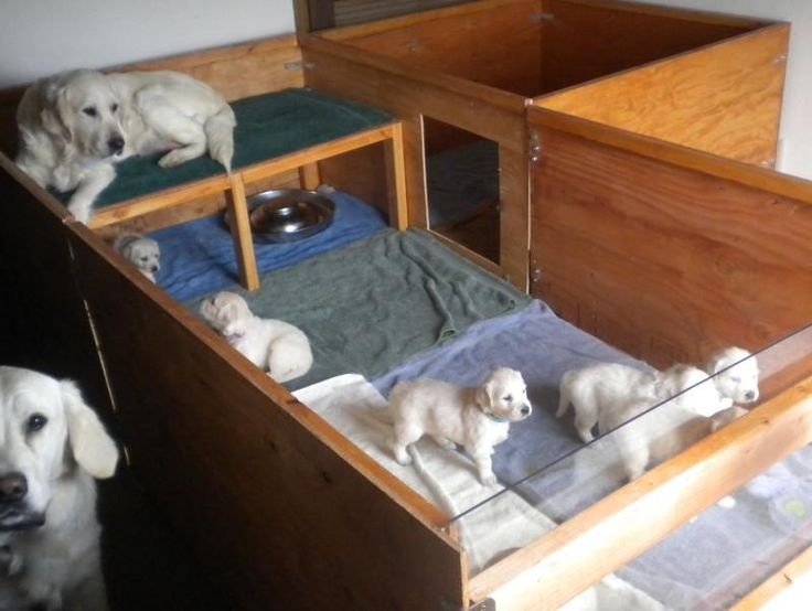 Best 25 whelping box ideas on pinterest dog whelping for Building dog kennels for breeding