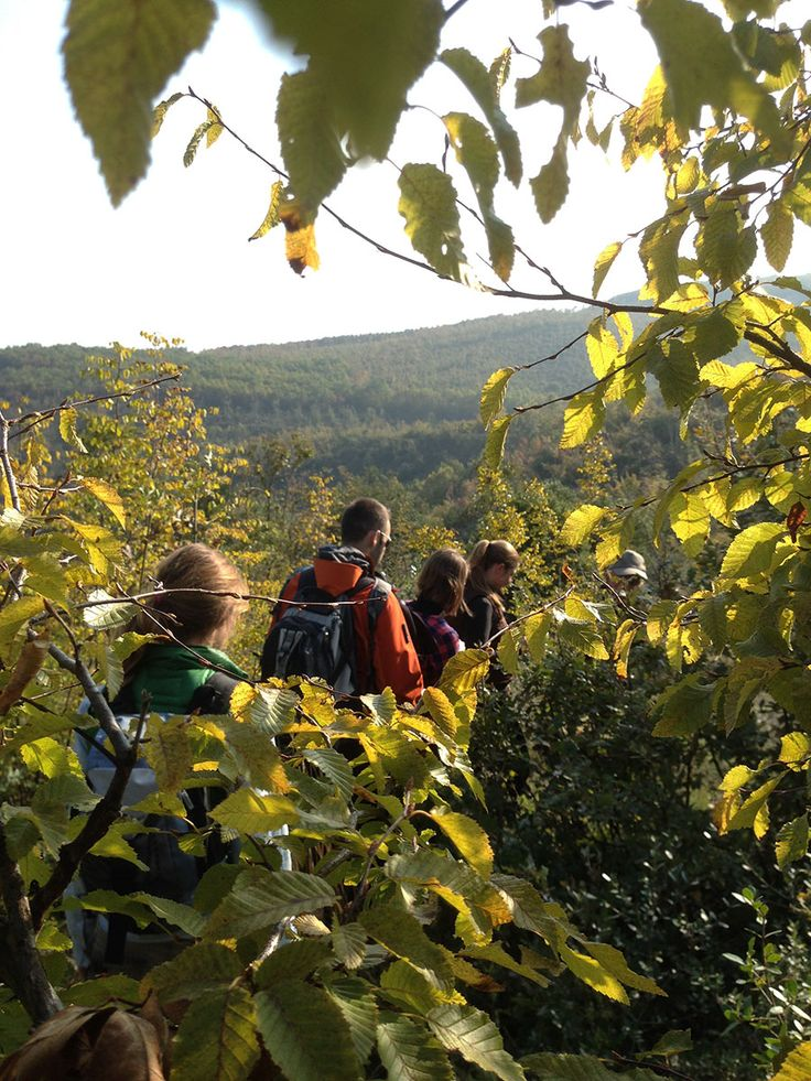 Hiking with trigiro in the nature - 3 days tour - Greece #trigiro #tour #hike #forest #nature #northGreece #Greece #travel