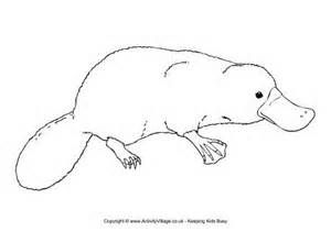 23 best images about animals on pinterest coloring for Duckbill platypus coloring page
